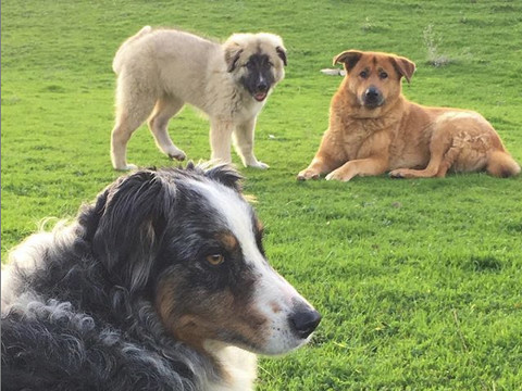 The WTF dogs