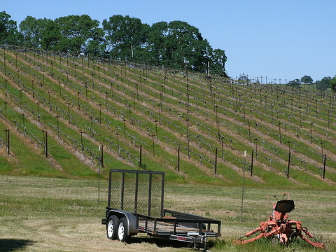 The pruned vineyard