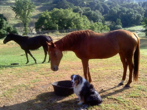 Timber with the horses