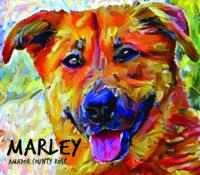 2021 October Special  – 3-Pack Marley Rosé